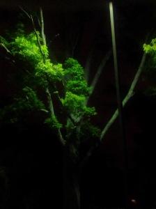 greentreemonster