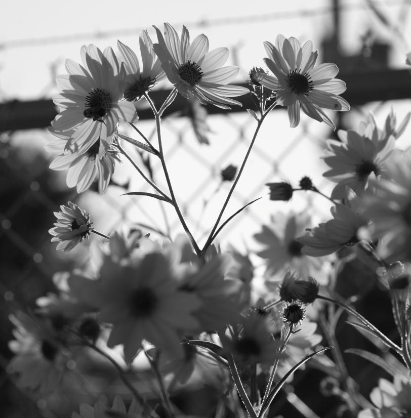Monochrome flora.