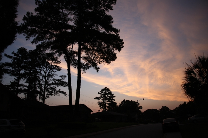 trees and clouds at daybreak