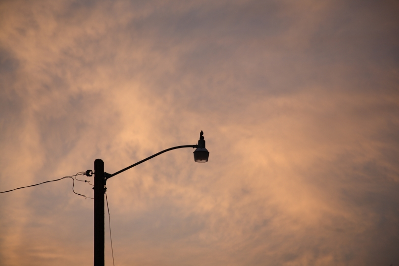 bird on streetlight at daybreak