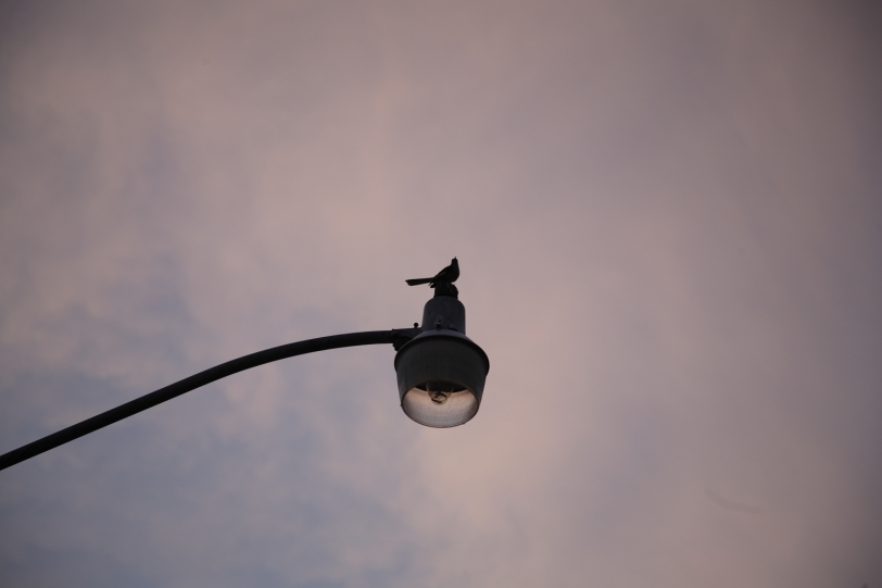 closer shot of bird on streetlight