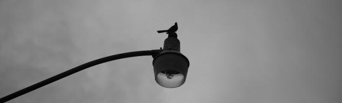 bird on streetlight - monochrome