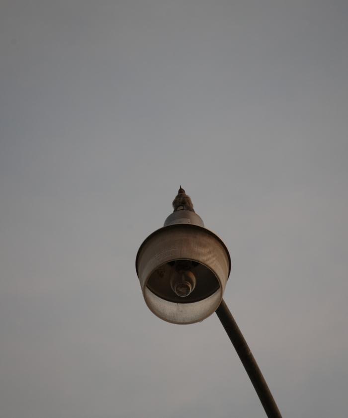 close shot of bird on streetlight