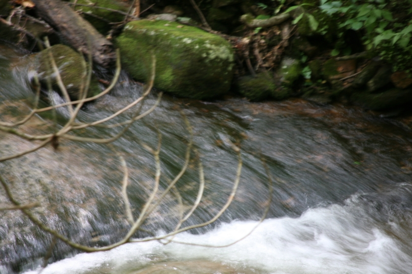 branches over running stream